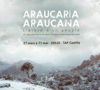 17CT6_Araucaria Araucana